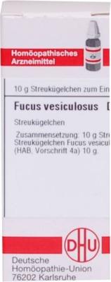 FUCUS VESICULOSUS D 4 Globuli